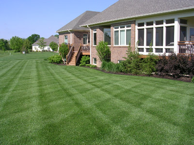 perfect-lawn