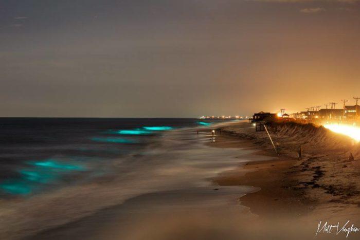 bioluminescence galveston 2