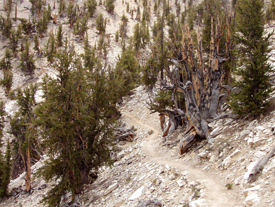 old-tree2